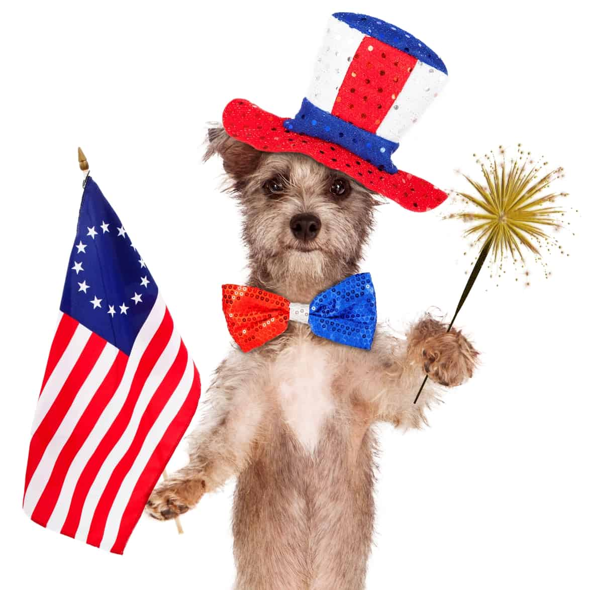 July 4th pet tips